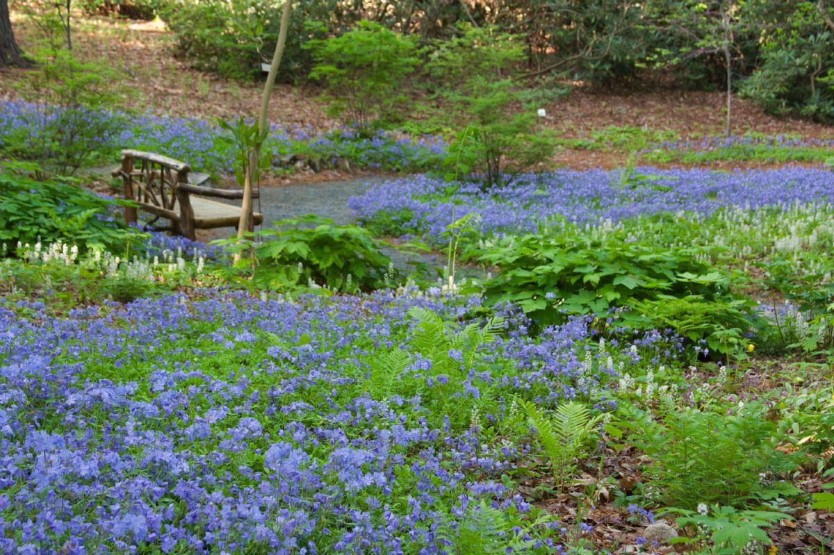 Garden in the Woods Timed Admission 2021 Season