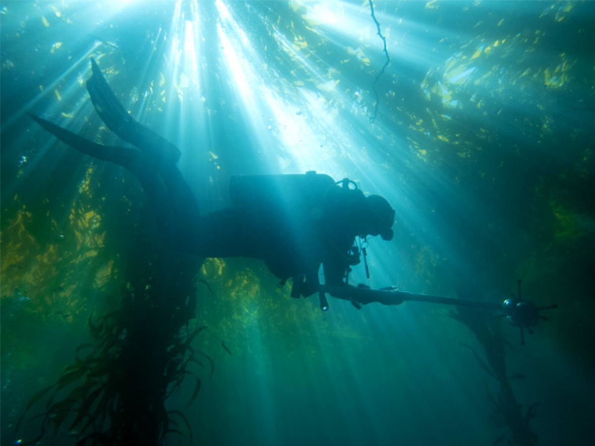 Into the Deep: The Secret Lives of Fishes off Carmel's Storied Coastline